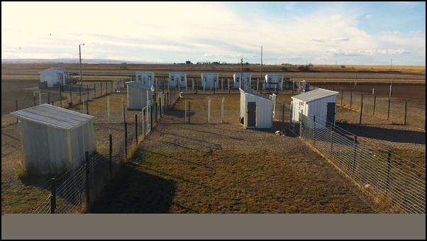 Dog Kennels In Grande Prairie